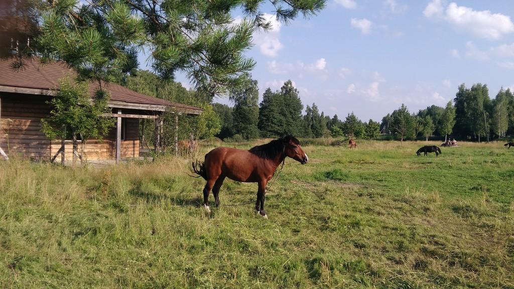 Экотуризм и агротуризм в Калужской области - где отдохнуть на природе