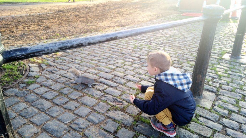 Белки в Гайд парке